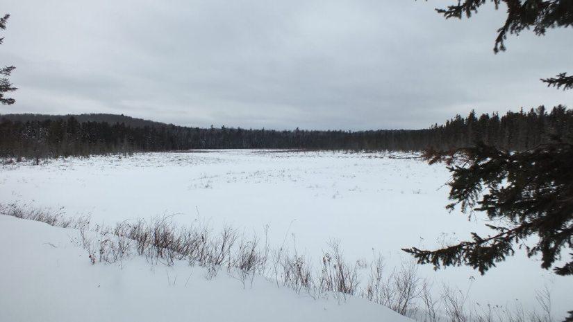 Spruce Bog, Algonquin Provincial Park, Ontario, Canada