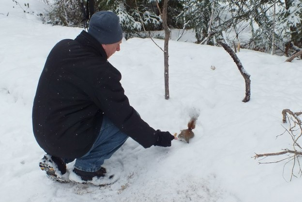 Red squirrel being feed in the winter in Algonquin Provincial Park