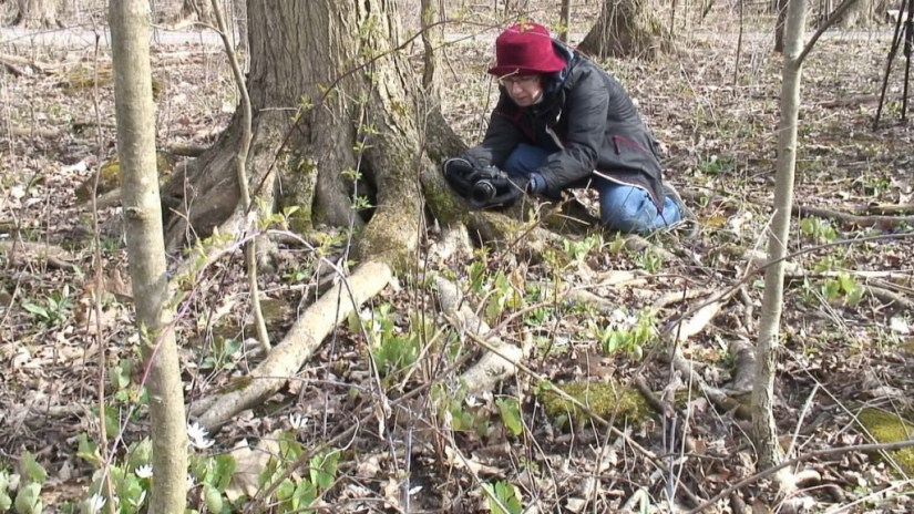 Jean takes pictures of various plants at Beamer Memorial Conservation Area, Grimsby