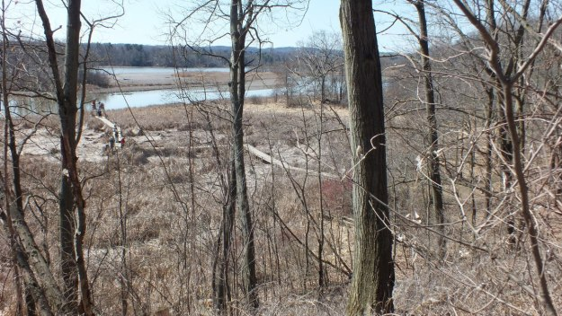 Marsh boardwalk - Cootes Paradise Marsh - Hamilton - Ontario