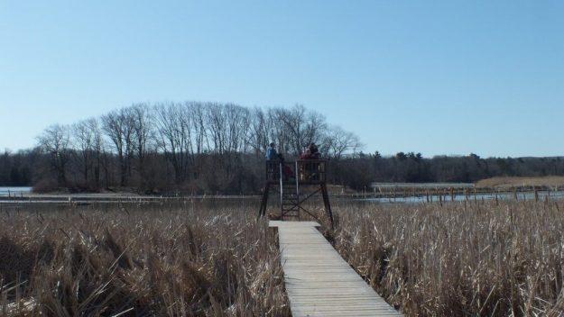 Marsh boardwalk lookout - Cootes Paradise Marsh - Hamilton - Ontario