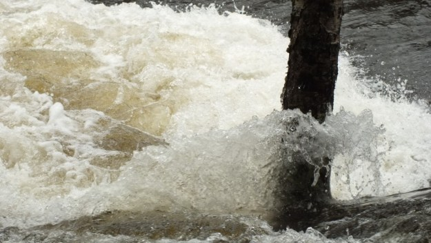Ragged Falls - foaming water around flooded tree - Oxtongue River - Ontario - April 20 2013