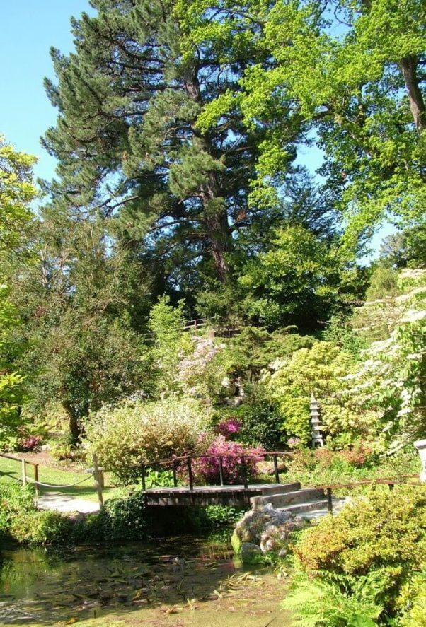 garden bridge in the Japanese Garden - Powerscourt - Ireland