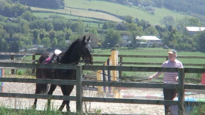 Chris works horse - Enniskerry - wicklow - ireland