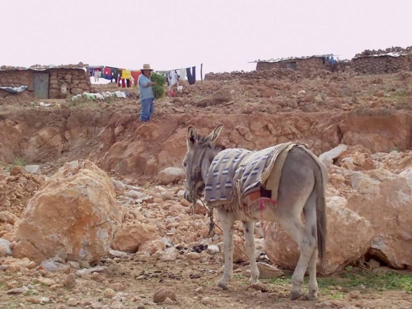 Lady prepares to feed donkey, Nuevo Santiago, Peru