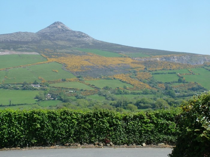 Sugar Loaf Mountain with Yellow Gorse growing on its sided - Enniskerry - Wicklow - Ireland