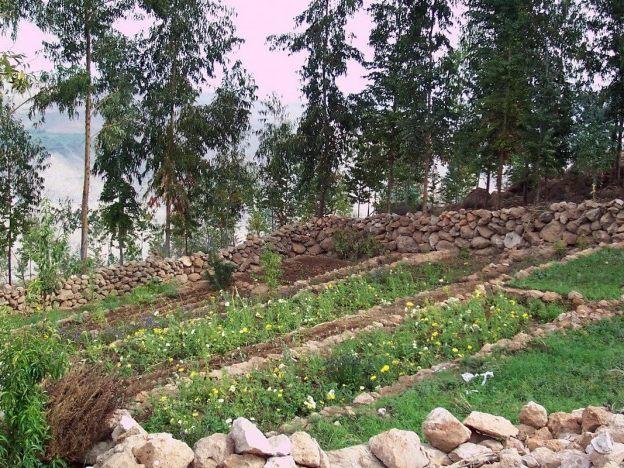 Village gardens of Nuevo Santiago, Peru
