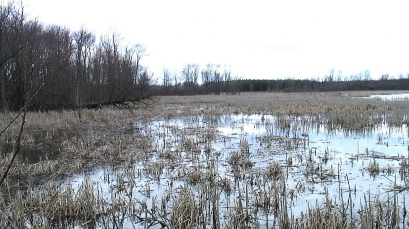 West Cranberry Tract marsh - Whitby - Ontario