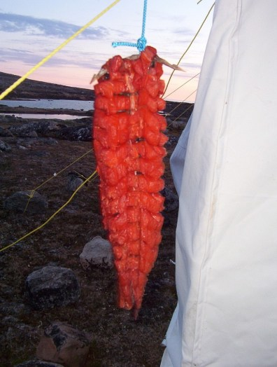 arctic char prepared in the inuit method - nunavut - canada