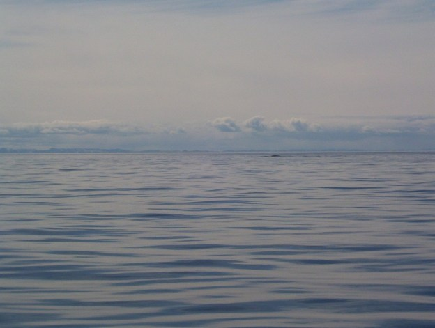 arctic ocean - ripples from whale - off baffin island - nunavut
