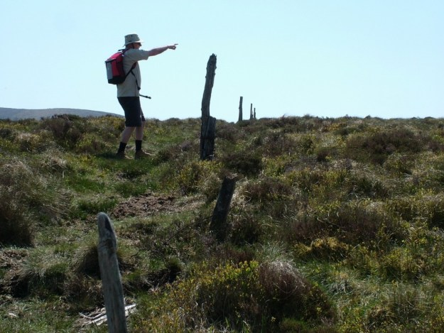 bob points out a deer in meadow - wicklow mountains national park - ireland