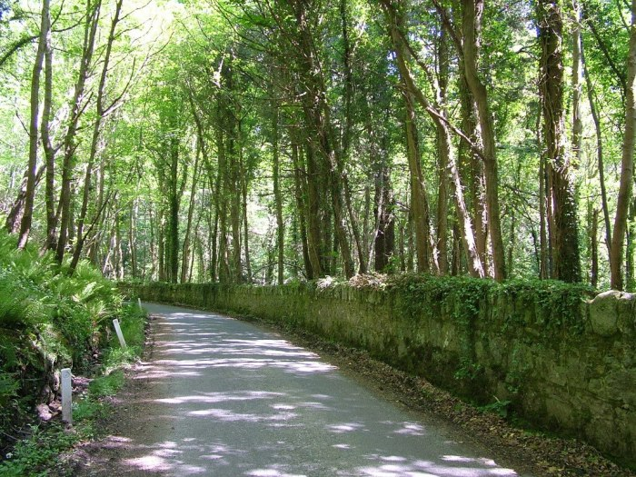 country road with stone wall - near Oonagh Bridge - Enniskerry - Wicklow - Ireland