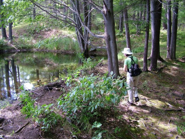 jean hiking along pond in frontenac provincial park - ontario