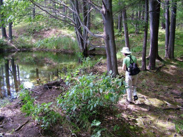 jean hiking along pond in frontenac provincial park - ontario