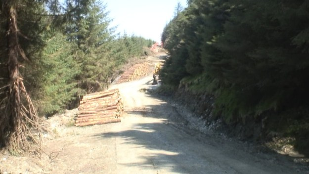 piles of cut trees - wicklow mountains - ireland