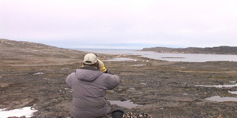 searching for bowhead whales with binoculars - kekerten island - nunavut