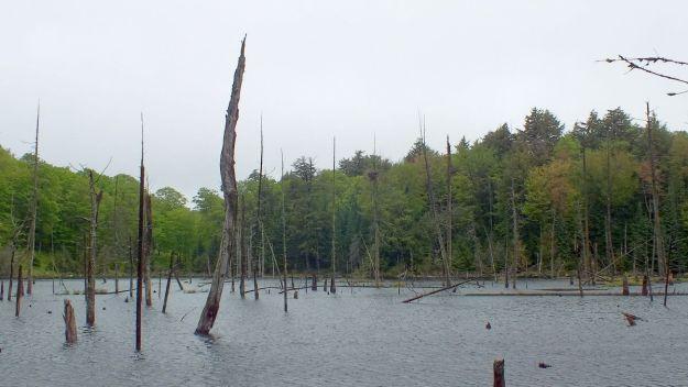 swamp - oxtongue lake - ontario - canada