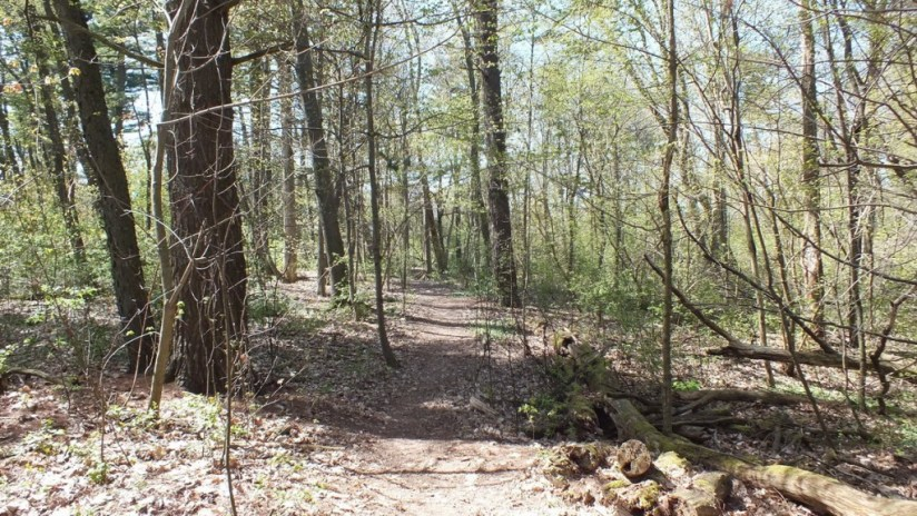trail through forest - Thicksons Woods - Whitby - Ontario