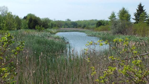 Wetland - Flank Trail - Second Marsh - Oshawa - Ontario