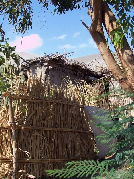 bamboo fences in sand dune village - camana - peru