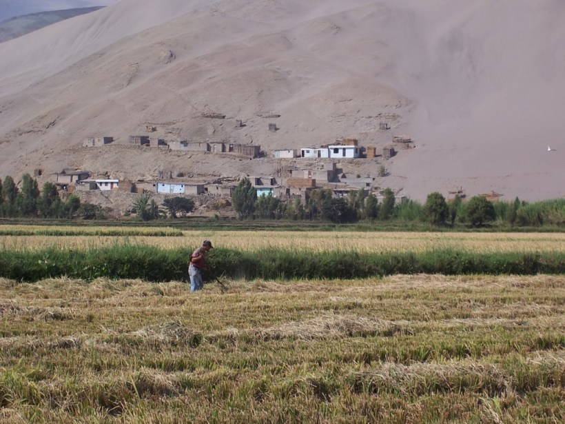 farmer works field near camana - peru