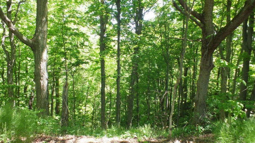 forest at forks of the credit provincial park - caledon - ontario
