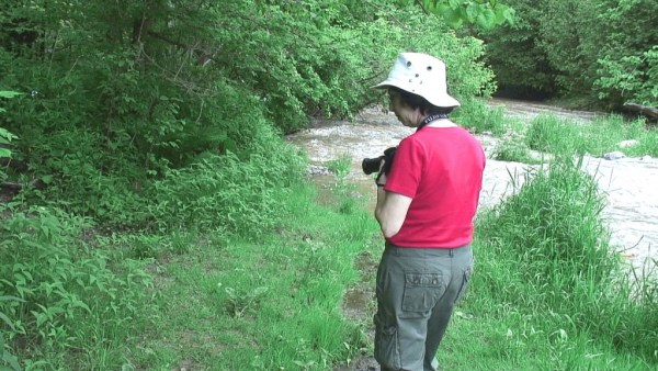 jean looks at green frog - seaton trail - green river - ontario