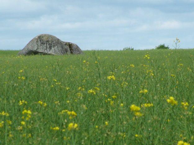 brownshill portal tomb in farm field - county carlow - ireland
