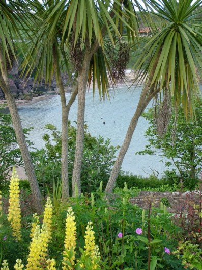 palm trees and flowers growing in dunmore east in county waterford - ireland