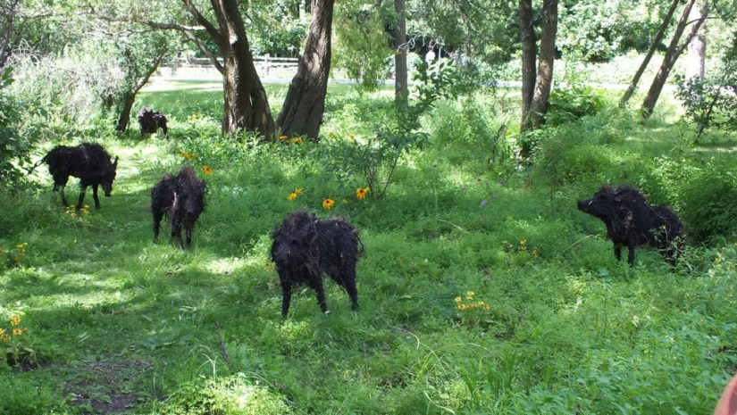 The Boars of Sally Island (five boars) - Mosaiculture - Montreal Botancial Gardens