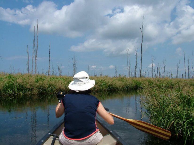 canoeing in minesing swamp, ontario