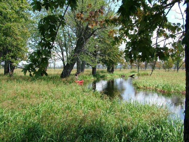 canoeing through minesing wetlands, ontario, frame to frame