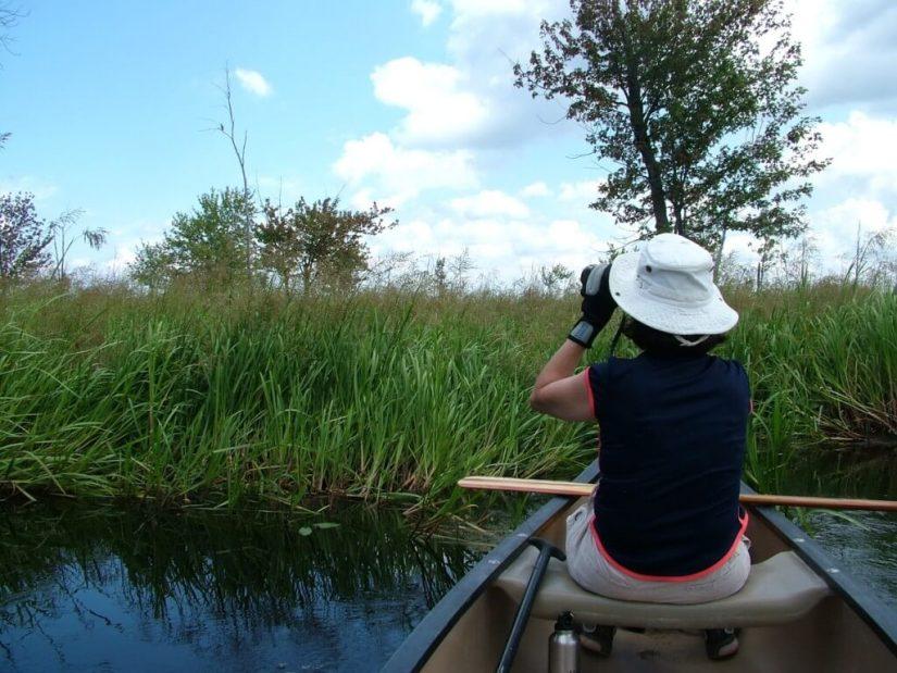 canoeing, minesing swamp, ontario
