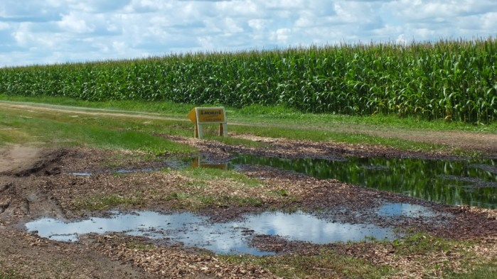 pond beside corn field - stayner - ontario