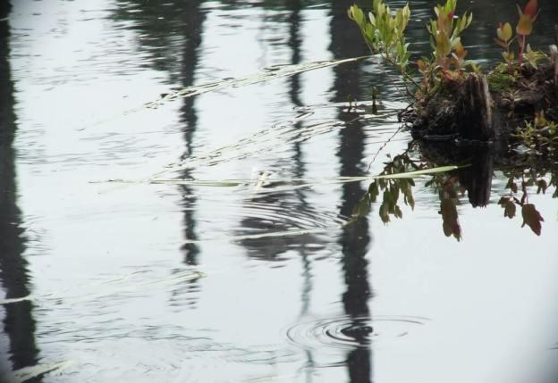 rain drops on swamp water, oxtongue lake, ontario
