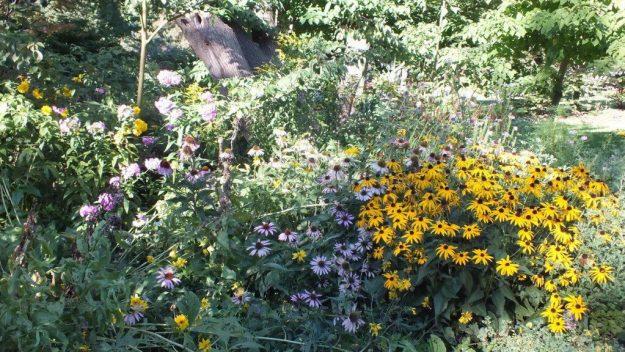 Rosetta McClain Gardens - flower garden - Toronto
