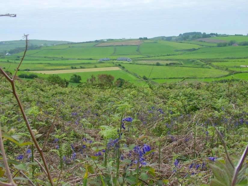 An image of wild blue flowers growing near the Drombeg Stone Circle near Glandore in County Cork in Ireland. Photography by Frame To Frame - Bob and Jean.