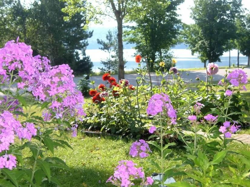 flower garden at oxtongue lake - ontario - frame to frame bob & jean