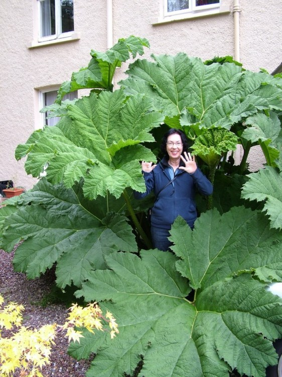 jean among large plants, amberleigh house, cobh, ireland