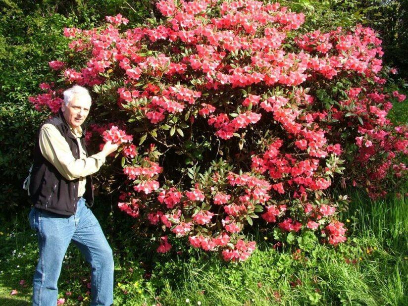 Bob standing beside a flowering Azalea bush at Blarney Castle in County Cork, Ireland