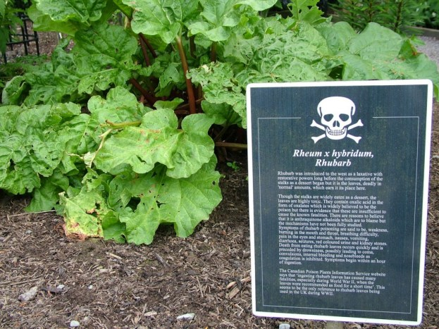 Rhubarb sign in the Poison Garden at Blarney Castle in County Cork, Ireland