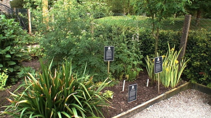 An image of various poison plants growing in the Poison Garden at Blarney Castle in County Cork, Ireland. Photograph by Frame To Frame - Bob and Jean