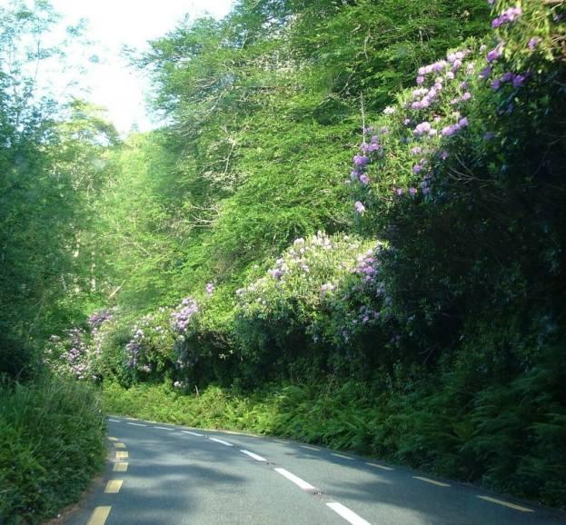 flowers along roadway, killarney national park, ireland 26