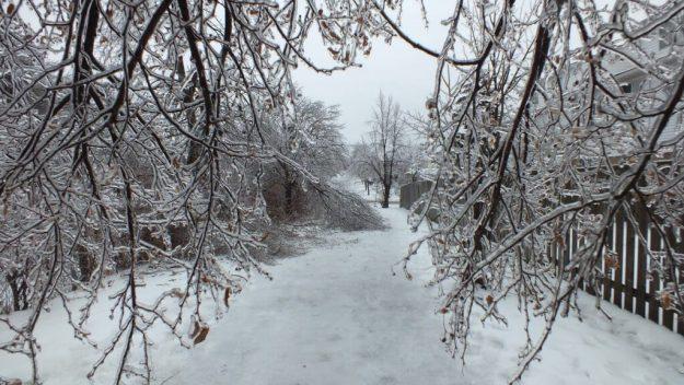 ice storm toronto 2013 - pic18