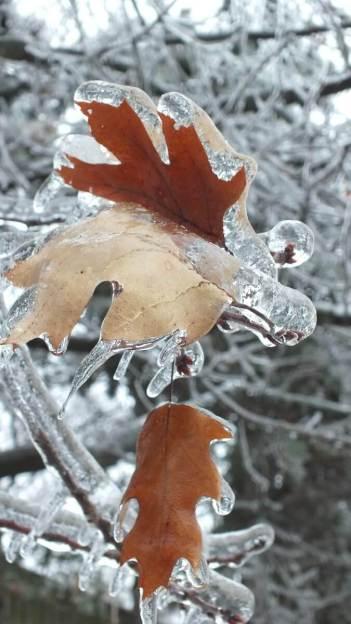 ice storm toronto 2013 - pic19