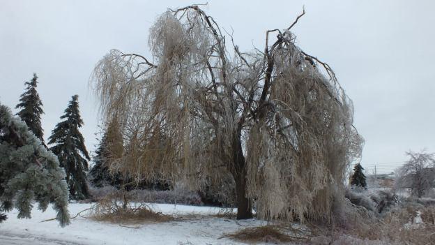 ice storm toronto 2013 - pic23