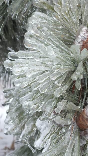 ice storm toronto 2013 - pic24