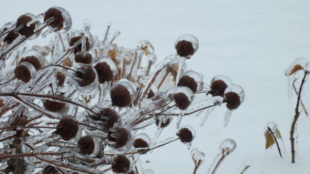 ice storm toronto 2013 - pic26