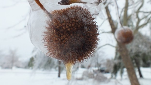 ice storm toronto 2013 - pic30