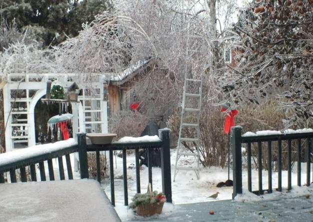 ice storm toronto 2013 - pic8